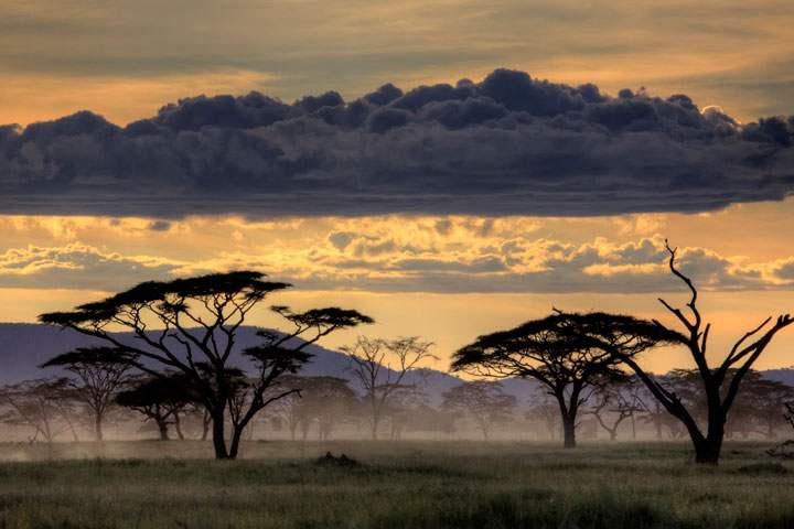 Serengeti en Tanzanie - Afrique