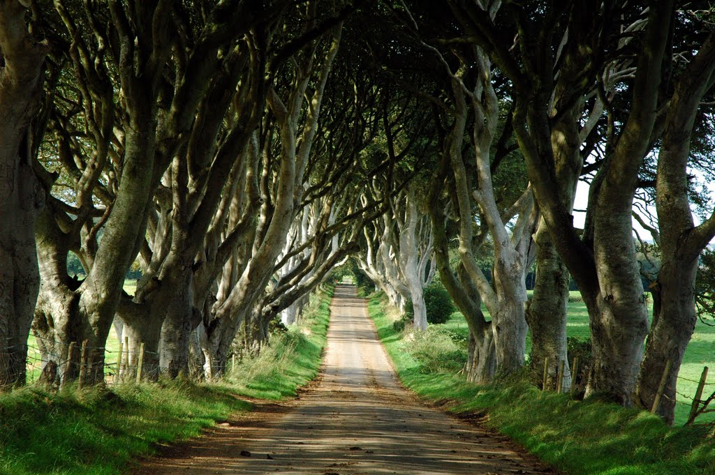 irlande dark hedges