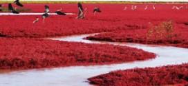 La plage rouge de Panjin : la Chine comme vous ne l'avez jamais vue !