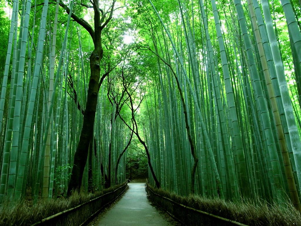 foret de bambou de Sagano Japon