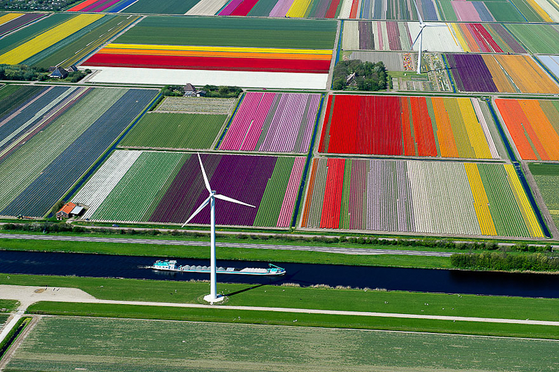 champs tulipe pays bas vue du ciel