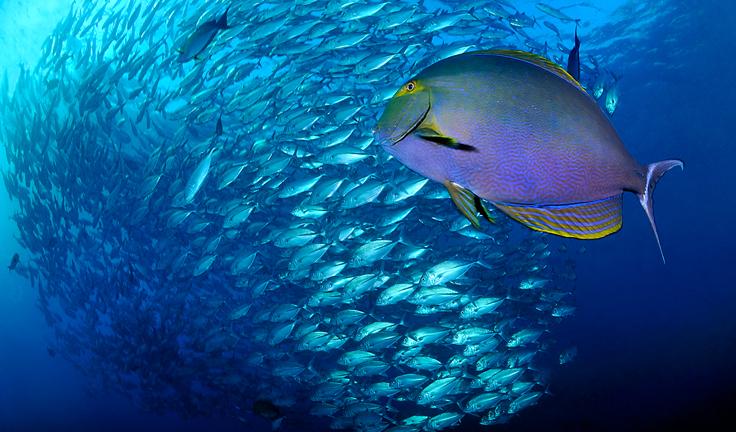 plus beaux spots de plongee du monde rangiroa