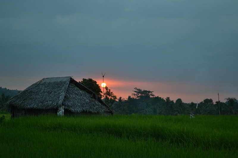 rizière ubud coucher soleil