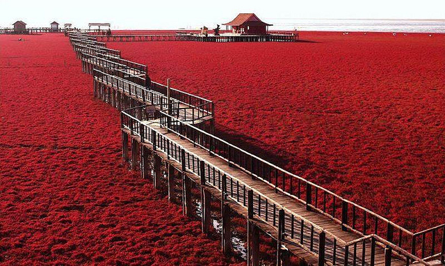 plage rouge paysage insolite