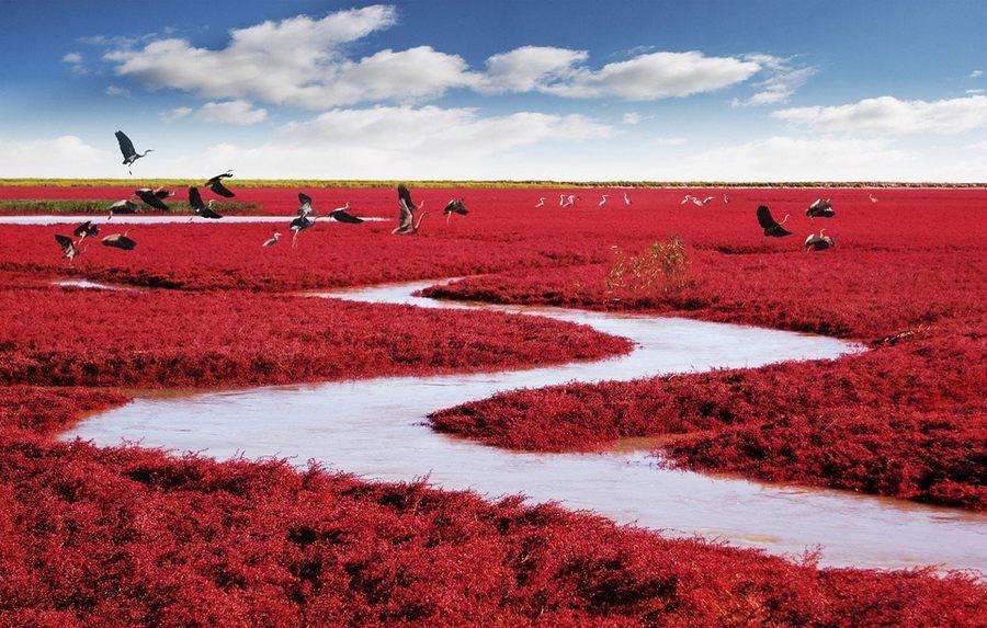 plage rouge panjin grues