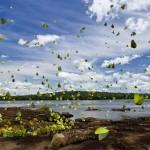 papillons multicolores Iguazu