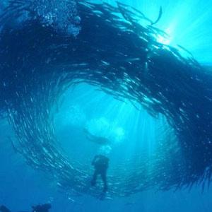 Les 8 plus beaux spots de plongée du monde